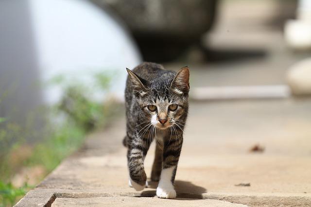 cat-379972_640