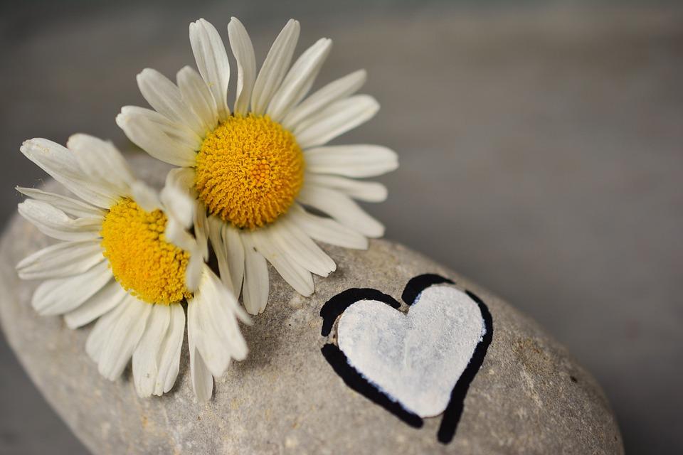 ハートが描かれた石の上に白い花が乗っている