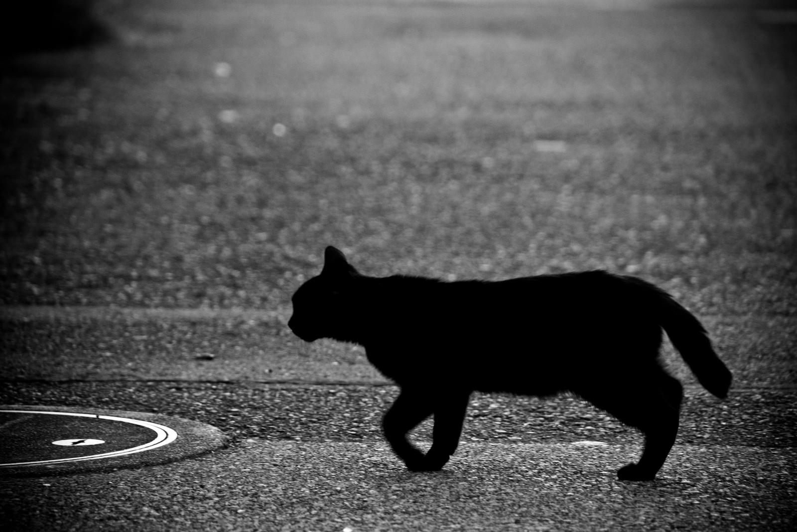 不吉な黒猫