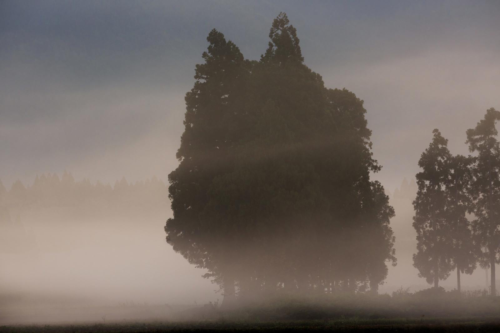 そびえ立つ大木