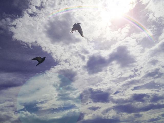 空と雲と鳥