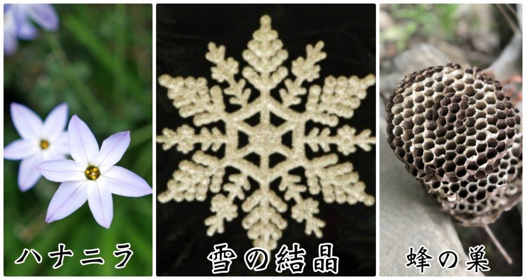 ハナニラ 雪の結晶 蜂の巣