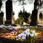 墓地に咲く花