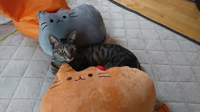 猫型クッションと猫