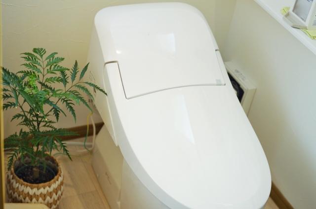 トイレと観葉植物