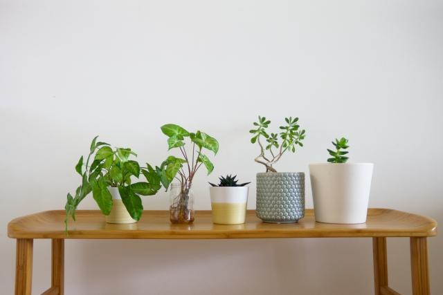 複数の観葉植物